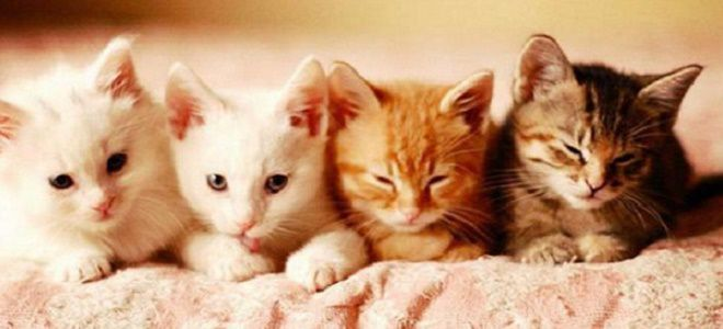Bagaimanakah Saya Boleh Menghubungi Anak Kucing Seorang Gadis Seorang Lelaki Nama Anak Kucing Yang Berwarna